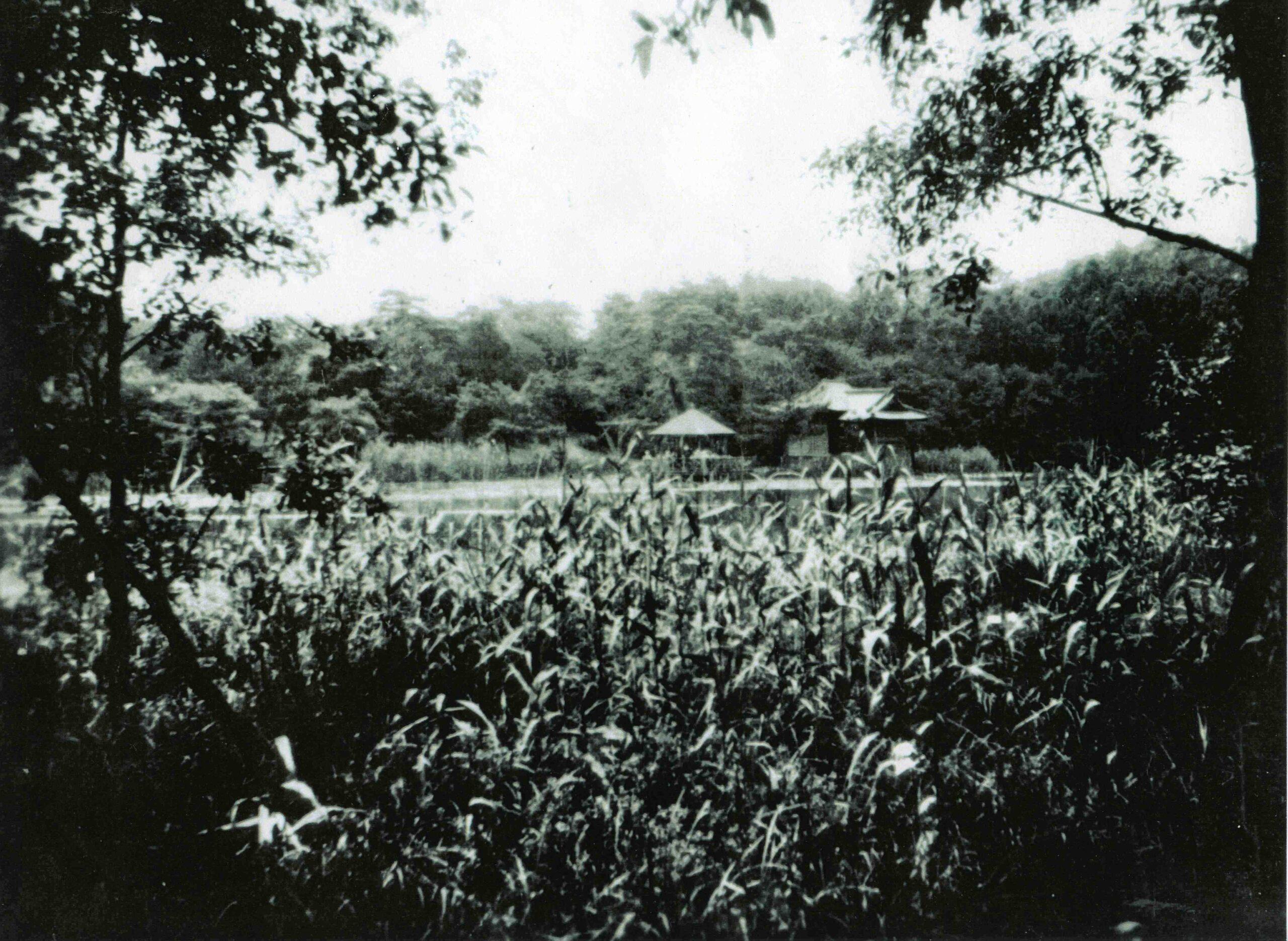 1 大正ころの三宝寺池周辺