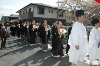 ≪4月≫ 満開の桜花の下に鶴は舞う