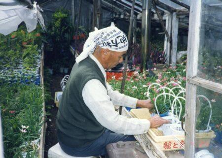 35 豊玉の花作り