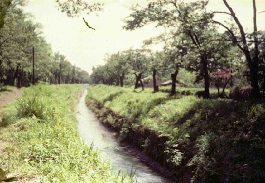 34 豊山の原(ぶざんのはら)と千川上水